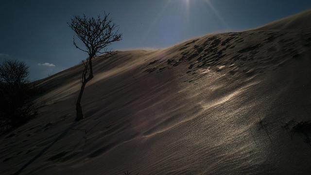 Sun on the dunes