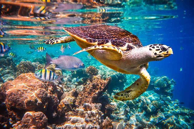 Phượt Hot - Phượt Côn Đảo xem rùa đẻ trứng (31)
