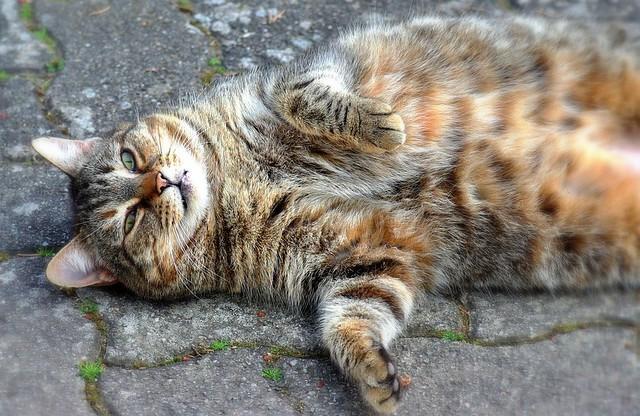 Un chat heureux !