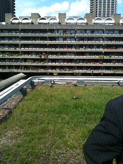 Green roof of the Museum of London, and view of Barbican flats