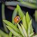 Ladybug Pose
