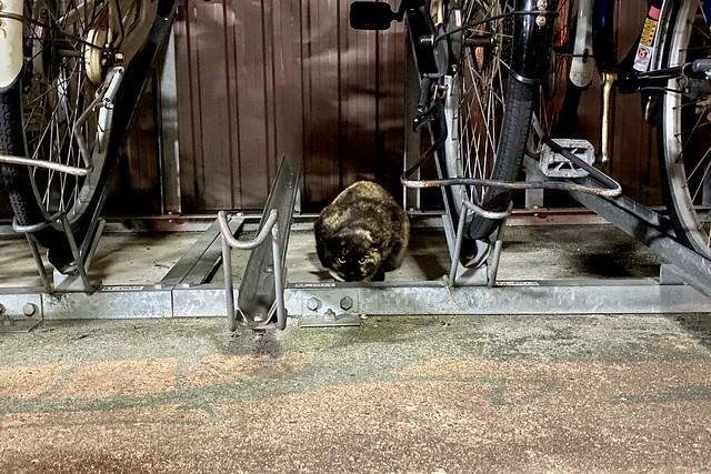Today's Cat@2020ー03ー22