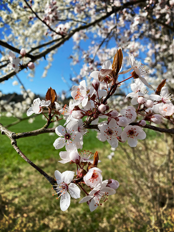 Frühling in Stein