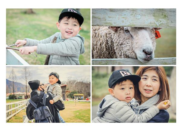 ブルーメの丘(滋賀県)で家族写真撮影 牧場の羊