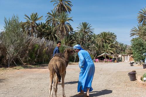 netherlands marokko