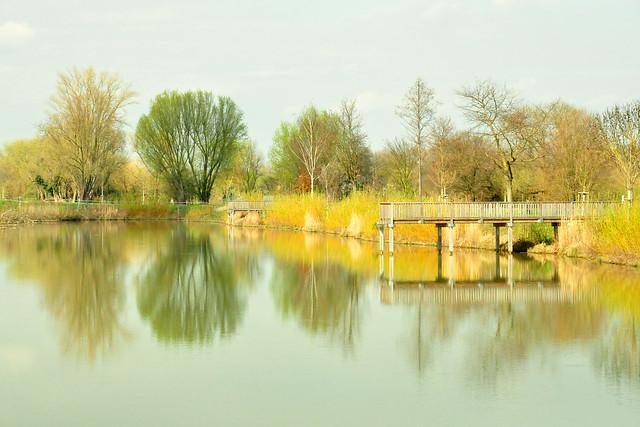 März 2020. Die Fischkinderstube am Neckar in Edingen-Neckarhausen ... Brigitte Stolle