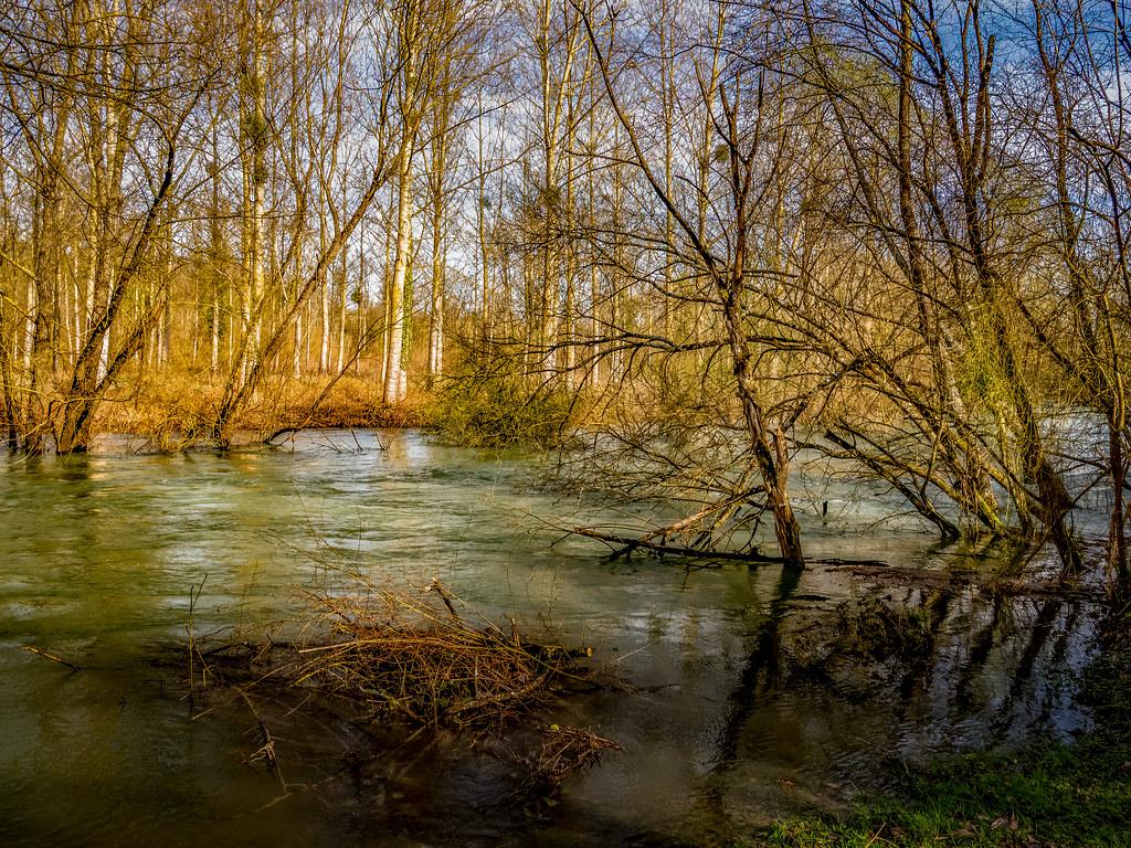 Crue de printemps sur les berges de l'Aube... 49687417396_7c52cf4489_b