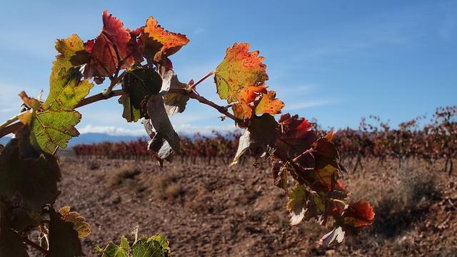 Far Autumn ... Be safe, please.!