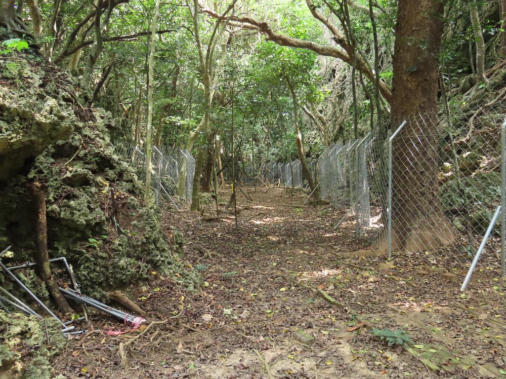 傳統菱形網經過山豬鑽洞就會變形,容易形成漏洞,讓台灣梅花鹿趁虛而入。攝影:廖靜蕙