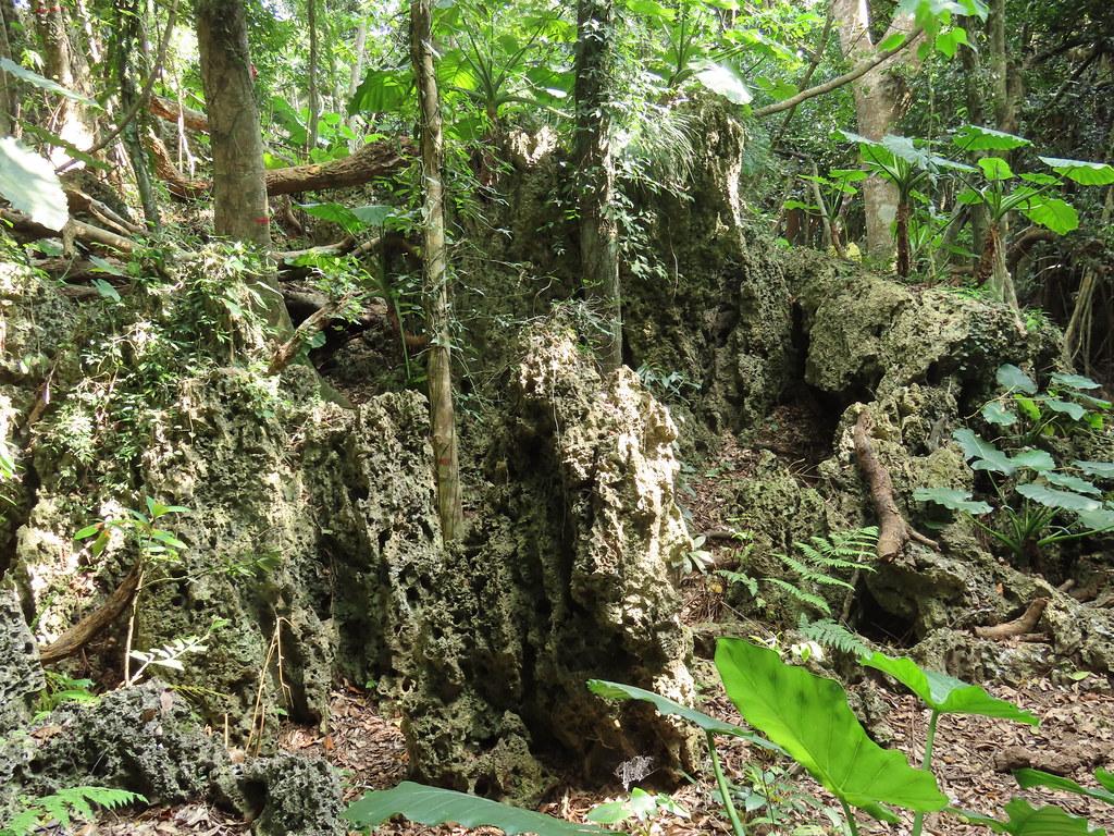 恆春高位珊瑚礁森林是台灣少有的珍貴地形。攝影:廖靜蕙