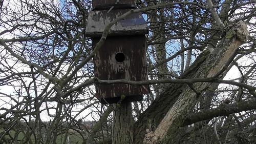 bird box Mar 20 1