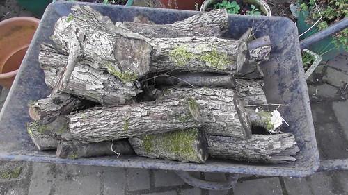 logs Mar 20