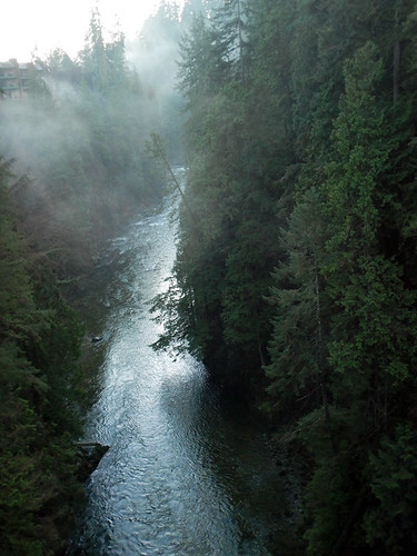 Evergreen trees and a touch of low cloud over Capilano River in North Vancouver, Canada