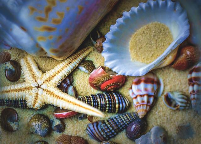 Natural Shells-