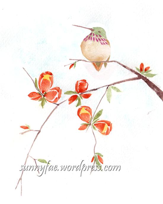 hummingbird practice sketch