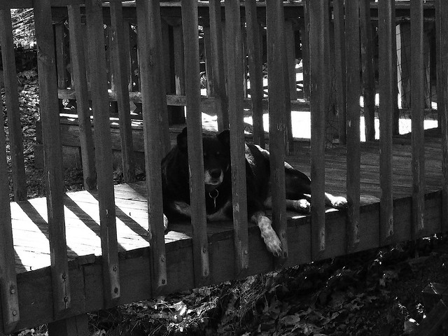 Like The Bear Cage At The Zoo