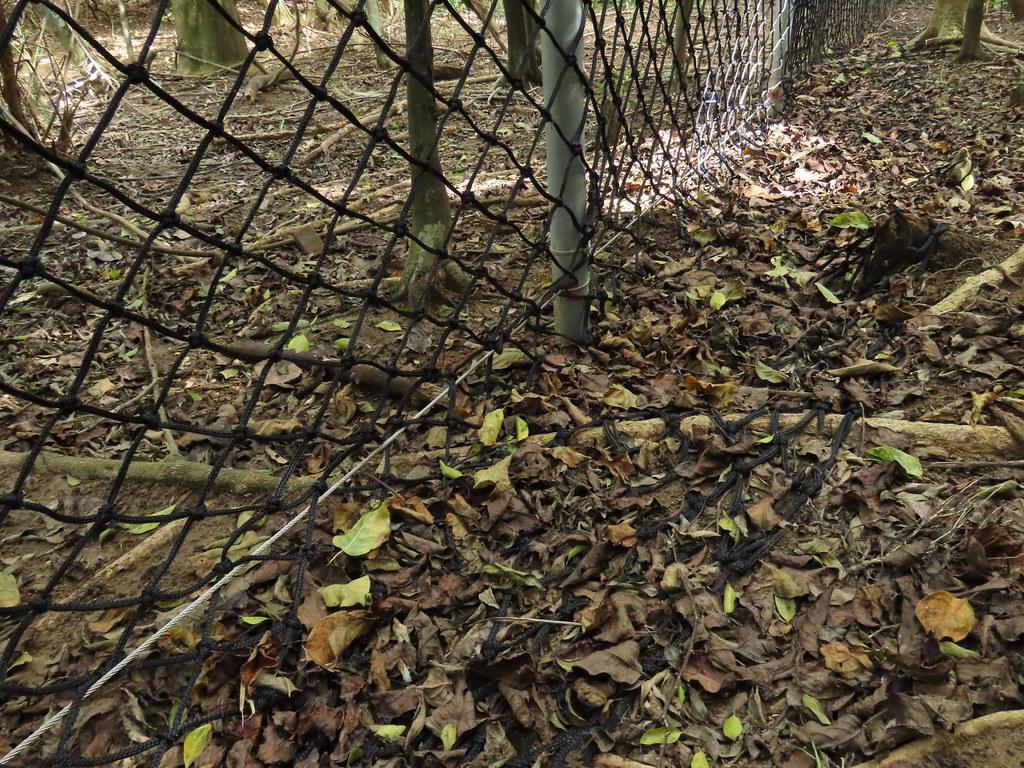 貼地後另留50公分長,讓野生動物斷念進入圍網。攝影:廖靜蕙