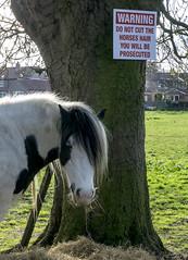 Horse hair sign