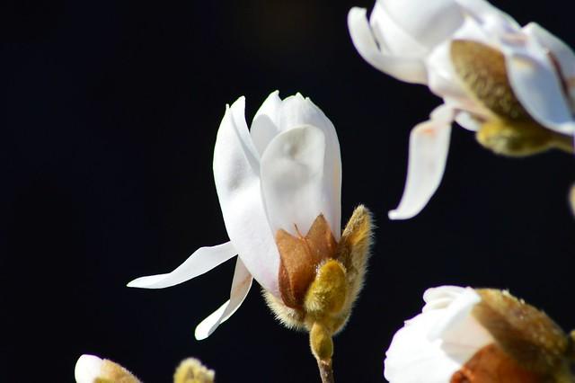 Faszination Spring