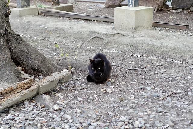 Today's Cat@2020ー03ー23