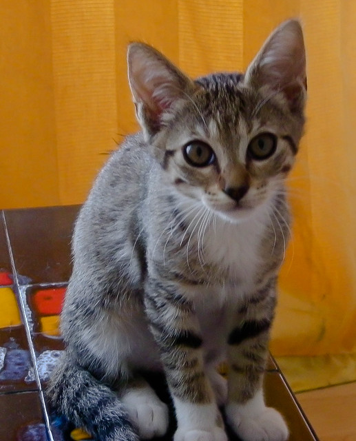 Quand mon chat était petit(e)