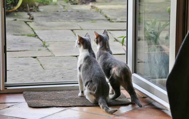 Kittens 2020-03-22 001