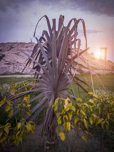 sunsetonplant sunset plants faisalabad pakistan kaleemshaheedpark meerubstudio adnanafzalmirza dreamylandscape