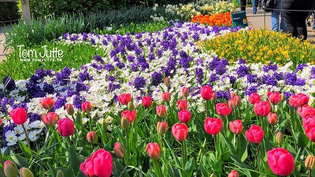 Flowers at the Keukenhof gardens, Netherlands - 2392