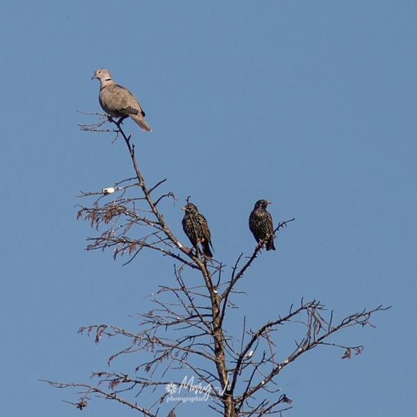 Perchés sur un arbre ... Perched on a tree ...