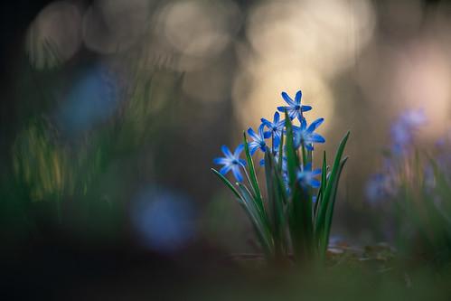 Backyard blues..