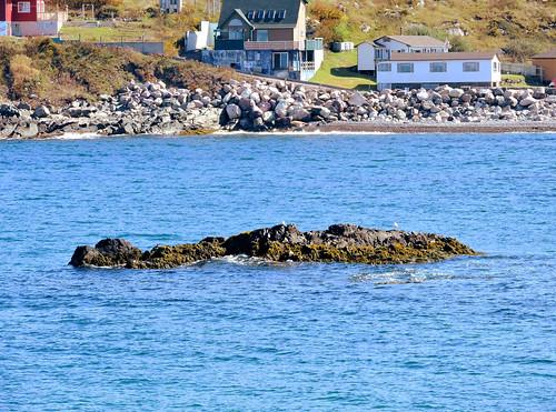 rocks mypics stpierre stpierreandmiquelon stpierreetmiquelon france shoreline shore coast seagulls