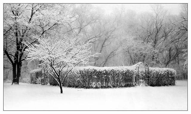 Winter Garden Scene on Paper