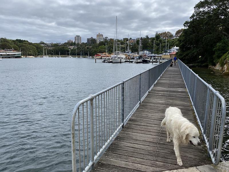 Berrys Bay walkway dog