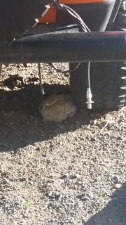 Rabbit Shelter