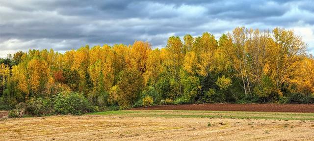 El otoño en San Millan de la Cogolla. La Rioja.