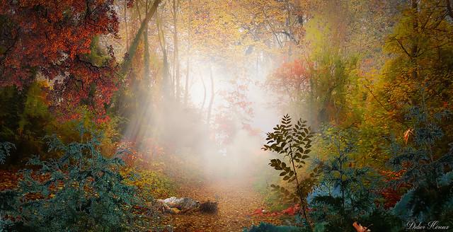 Sortir de la forêt