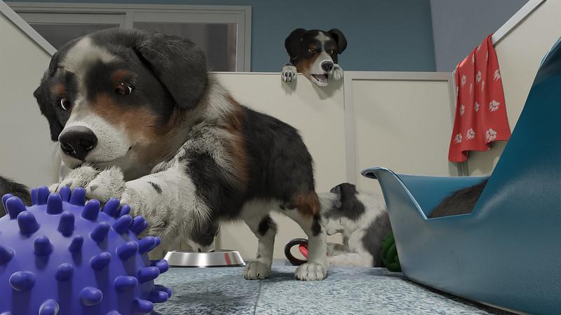 Dresseur de chiens - Chiots