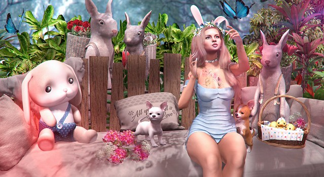 Meets the Bunny's