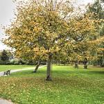 Trees at Moor Park, Preston