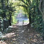 Leafy walkway in Penwortham, Preston