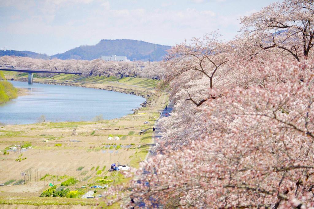一目千本桜(宮城県)