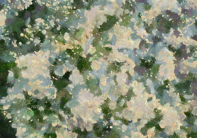 Белый сад / Jardin blanc / White garden