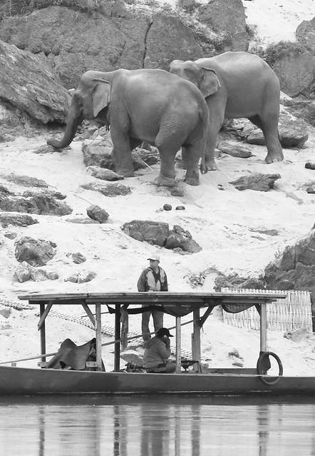 Mekong Elephants