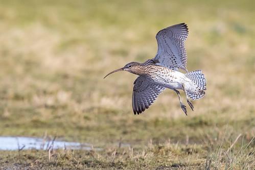 Curlew Landing