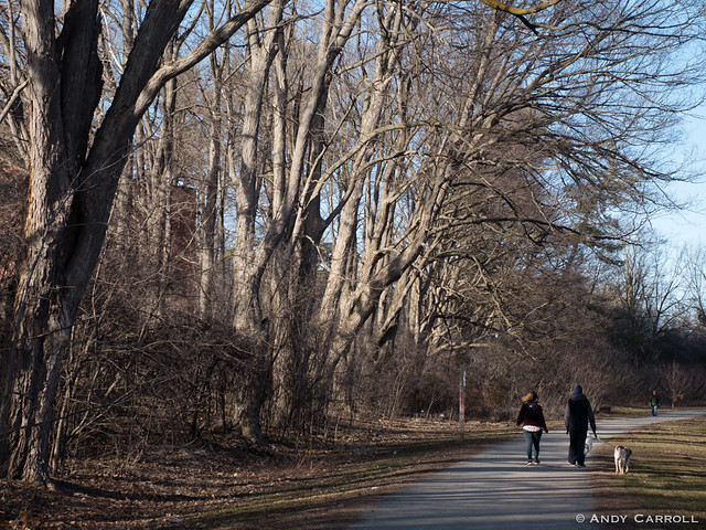 Bike path, with trees