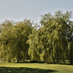 Trees in Haslam Park Preston