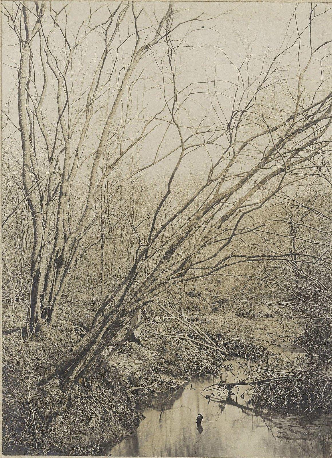 Деревья у реки. 1905 г.