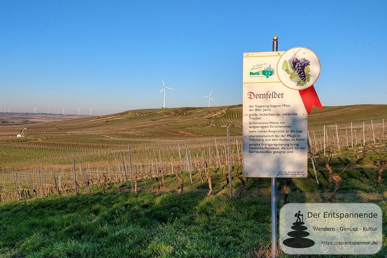 Dornfelder und Selzer Berg