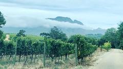 Glenelly Vineyards