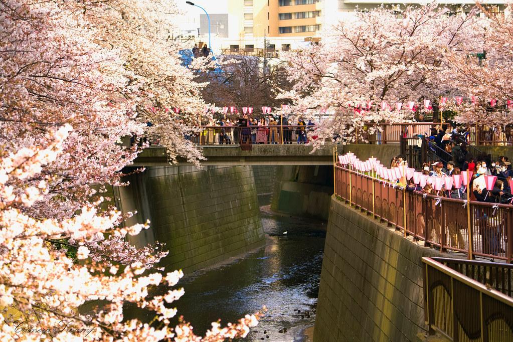 目黒川(東京都)